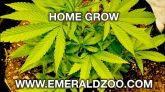 Emerald Zoo: The Grow Setup
