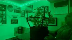 Emerald Zoo: The Grow - Atlas Plant Trainer